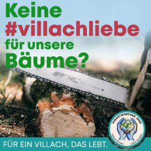Kein Baumschutzgesetz für Villach